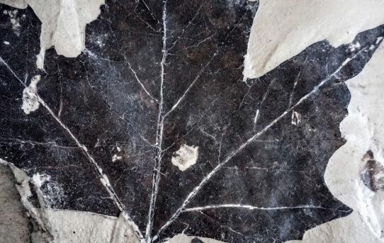 I reperti fossili del bacino di Castelnuovo: cosa si cela nel sottosuolo?